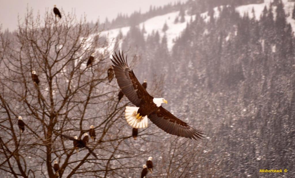 Beauty in Flight by AKshortstack