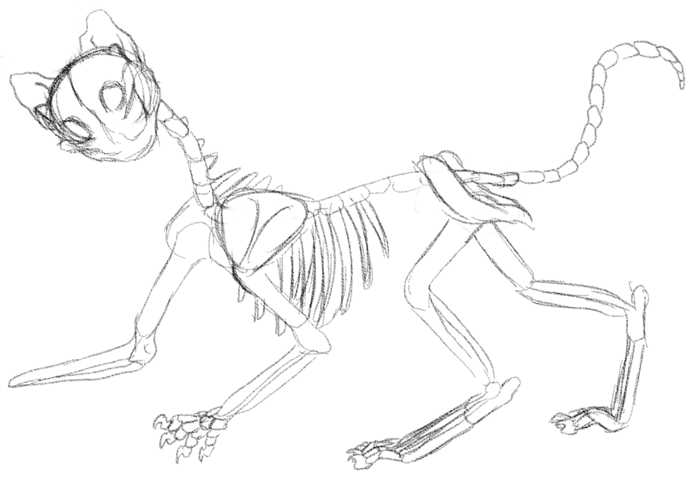 fail cat skeleton doodle -#main