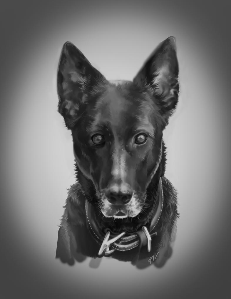Dog Pic by vendixnosferatu