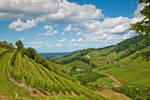 Beautiful Vineyards by ErwinStreit