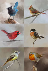Study of birds