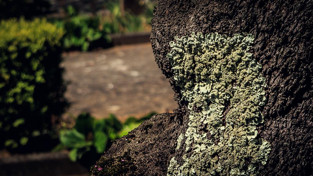 tree texture by pedrocasoa