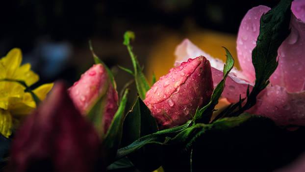 Closed rose