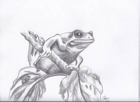 Froggie by Tara1974