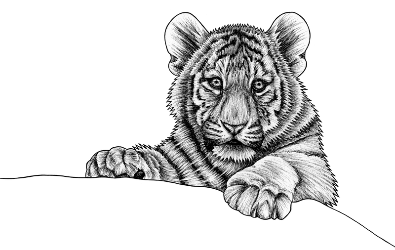 Amur tiger cub - ink illustration by lorendowding