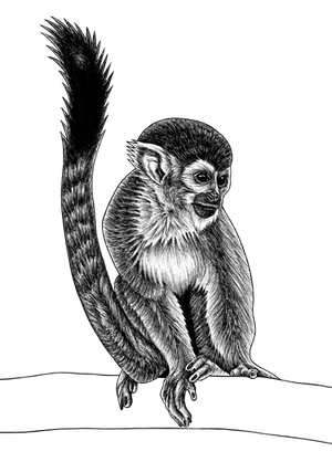 Squirrel monkey - ink illustration by lorendowding