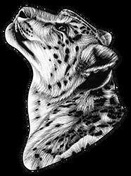 Snow Leopard - ink illusration by lorendowding