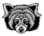 Red Panda - ink illustration by lorendowding