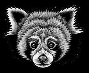 Red Panda - ink illustration