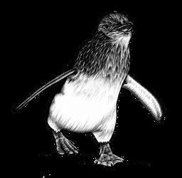 Explore Best Cutepenguin Art On Deviantart
