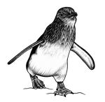 Little penguin - ink illustration by lorendowding