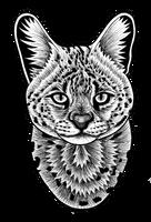 Serval - ink illustration by lorendowding