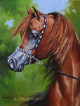 Arabian Horse ,, oil painting on canvas