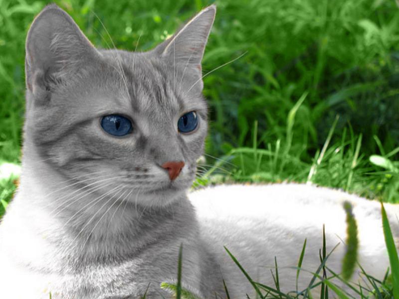Warrior cats*Rp*