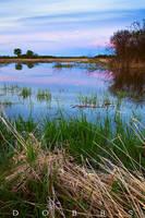 Wetland Wonderment by leavenotrase