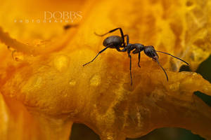 Ant on Orange by leavenotrase