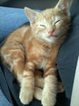 cute when sleeping