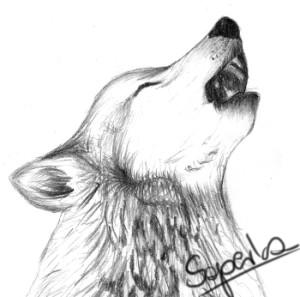 saperka99's Profile Picture