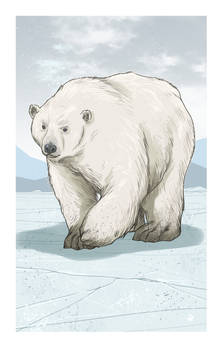 TDOMB - Polar Bear