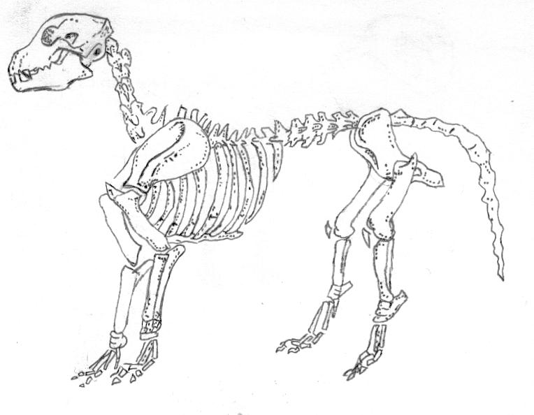 squelette de chien by AngesDechus1
