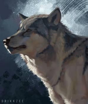 Quick Study - Siberian Husky