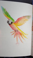 Watercolor Parrot Sketch by Marimaru