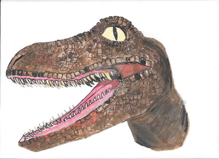 Velociraptor by ARTist05