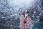 Melancholy of Sakura