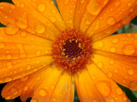 After rain by sirena-pirey