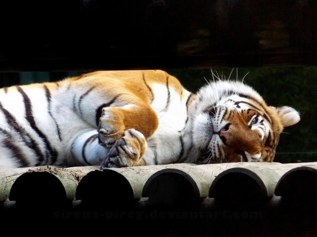 I sleep but I watching you by sirena-pirey