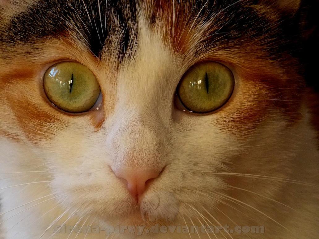 Cat with lemur's eyes by sirena-pirey