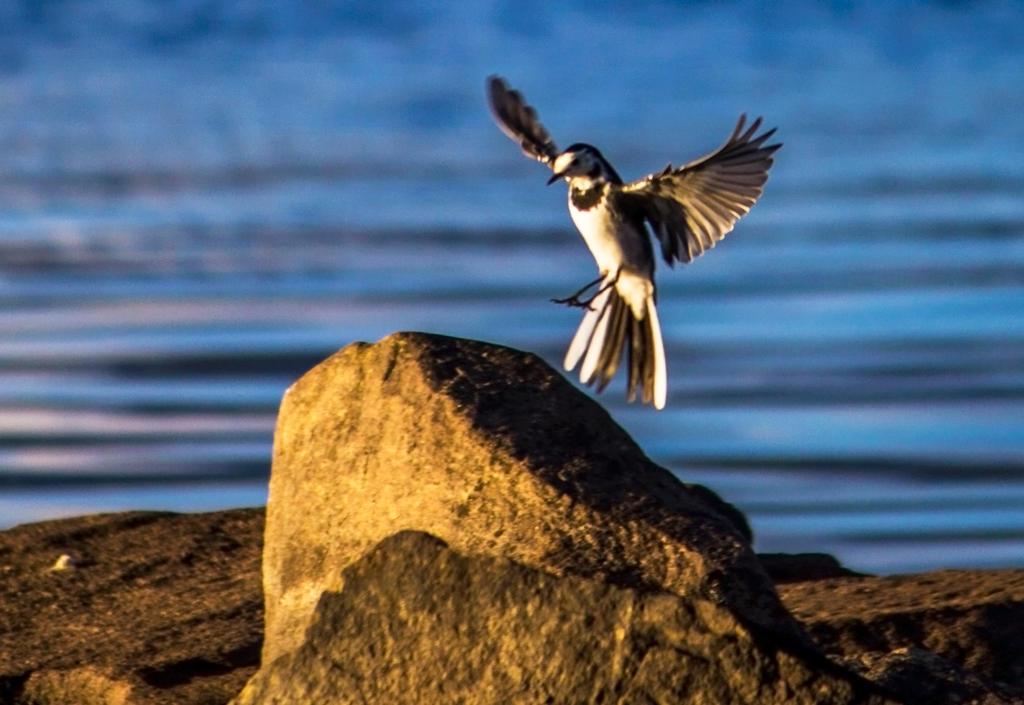 Smooth Landing. by JonnyAltezza