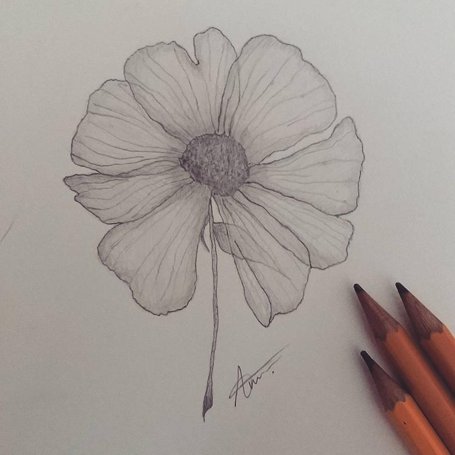 flower by AKSonne