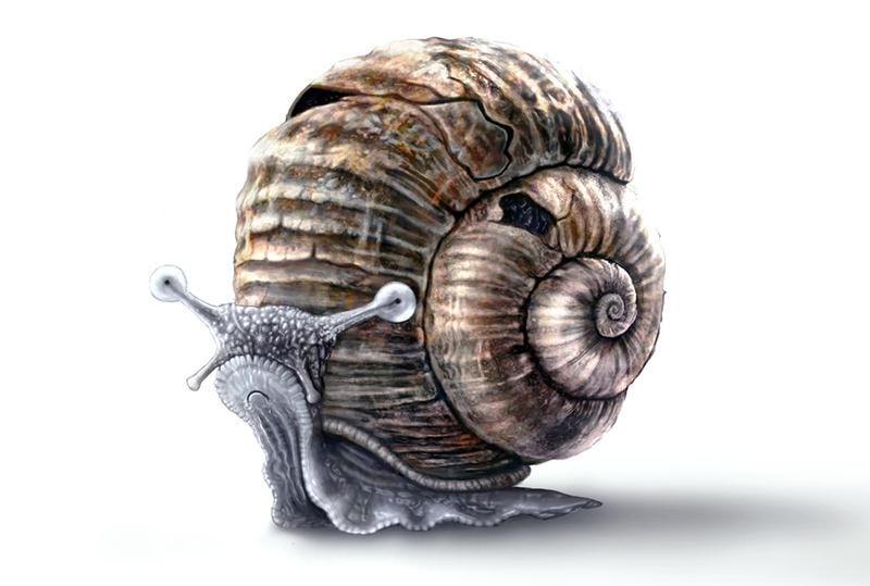 Cute Snail by RetroLin