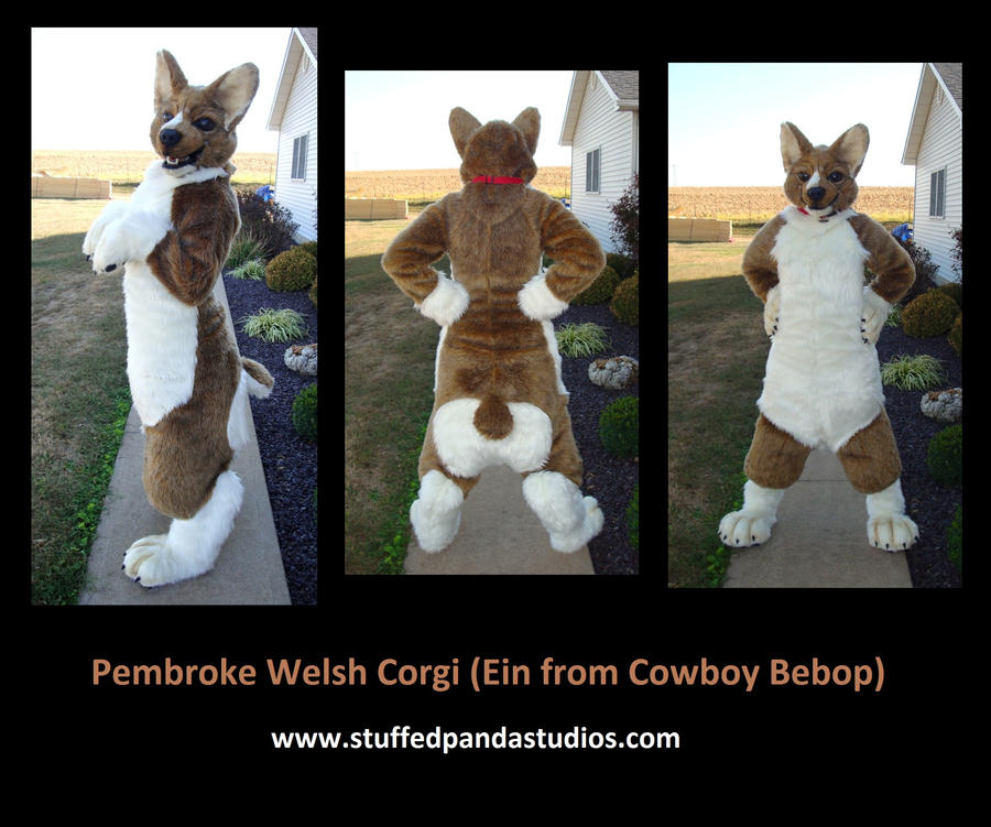 Pembroke Welsh Corgi Done How Do You Make Those Animal