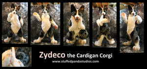 Zydeco the Cardigan Corgi
