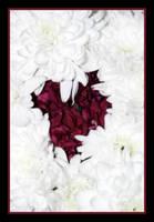 If I had a single flower..... by izabella-leah