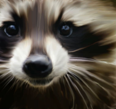 Painted Raccoon by Kenekochan01