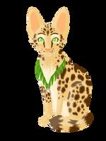 Shaman Cat