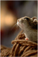 Ratatouille? by Nuneth