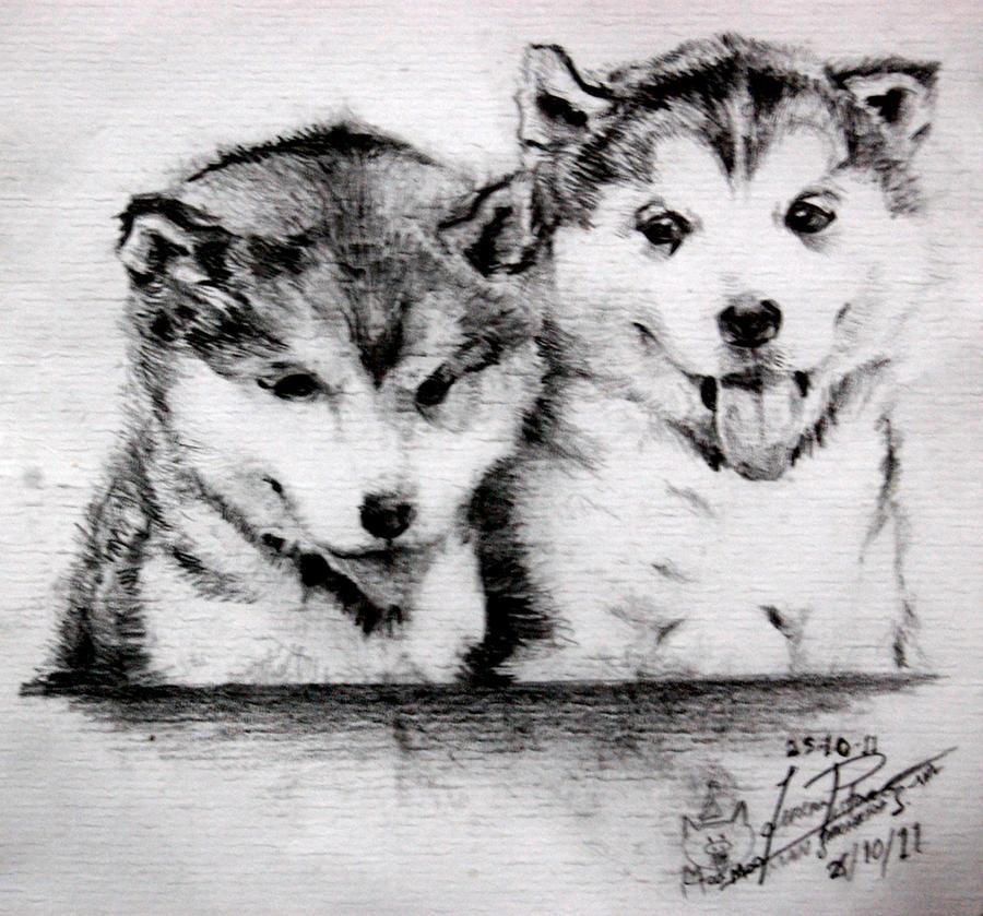Alaskan Malamute Puppies by MnStrptrSkrn