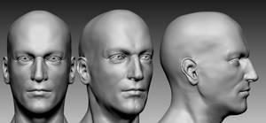 Male anatomy (head)