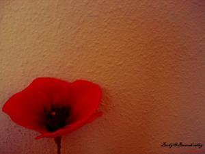 Gleaming poppy