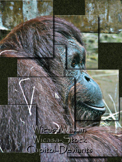 WicasaWakan's Profile Picture