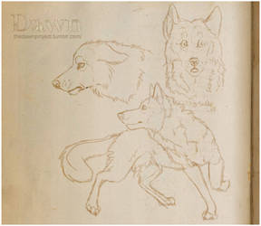 The Dawn Project: Sketches about wolf by SaQe