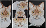 3D - Portraits: Burmese cat