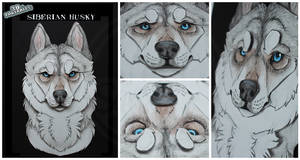 3D - Portraits: Siberian Husky