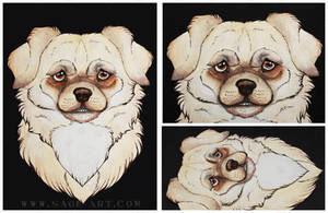 Commissions: Medium size Tibetan Spaniel by SaQe
