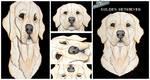 3D - Portraits: Golden Retriever