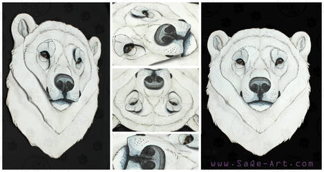 3D - Portraits: Polar bear